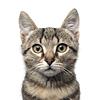 Adopteer een kat