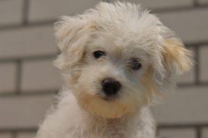 14449 Puppy7